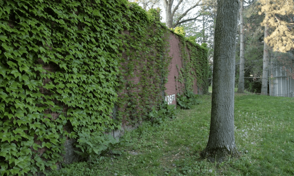 Forbes Field Outfield Wall